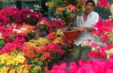 Hoa cảnh, cây kiểng trưng Tết 'tràn' về phố Sài Gòn