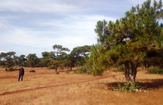 Lo mất rừng bởi dự án sân golf