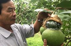 Nâng niu đặc sản Tết: Nâng cấp trái cây miệt vườn