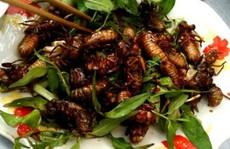 Đặc sản ve sầu ngon nức tiếng ở Bình Phước