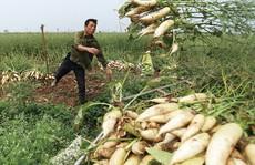 'Hiện tượng nông dân nhổ bỏ su hào, củ cải chỉ là số ít'