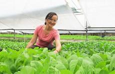 Vườn rau hữu cơ 'sáu không' của nữ thạc sĩ