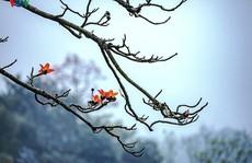 Đẹp nao lòng mùa hoa gạo tháng Ba