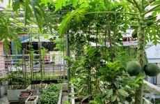 Vườn rau diệu kỳ của mẹ