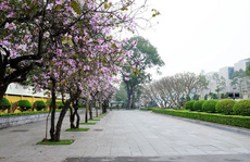 """""""Điểm danh"""" những mùa hoa tháng 3 đẹp mê hồn"""