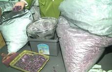 Chủ mưu vụ thực phẩm chức năng chữa ung thư từ than tre đã bỏ trốn