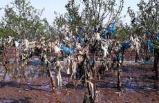 Kinh hoàng cánh rừng rác khổng lồ ven bờ biển ở Thanh Hóa