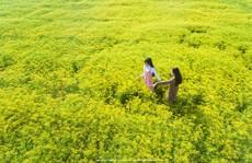 Những cánh đồng hoa gây sốt thời gian qua