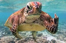 Bức ảnh chú rùa 'tỏ thái độ' trước ống kính gây sốt bất ngờ