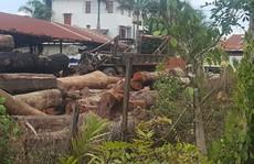 Vụ trùm gỗ lậu Phượng 'râu': Xem xét kỷ luật hàng loạt lãnh đạo biên phòng