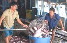 Gỡ vướng cho xuất khẩu cá tra sang Campuchia