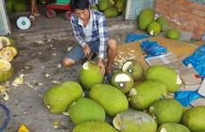 Ồ ạt trồng mít Thái siêu sớm: Cẩn trọng 'bài học cam sành'