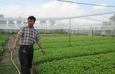 TP HCM có gần 900 ha rau củ quả VietGAP
