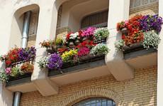 'Ngất lịm' với những ban công rực rỡ sắc hoa mùa hè