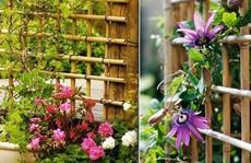 Vườn đứng: Giải pháp hoàn hảo trong không gian nhỏ