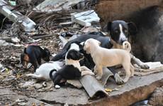 Giết chết cả bầy chó hoang sau khi 14 trẻ bị cắn tử vong