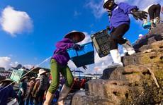 Chợ cá Bến Do nhộn nhịp lúc bình minh