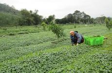 Nông nghiệp hữu cơ không chỉ có 'sạch'