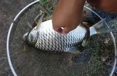 Thiếu niên tử vong nghi vợt cá bị điện giật