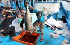 Trầy trật đi biển vụ cá Nam