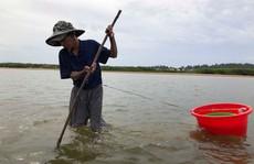 'Cao thủ' bật mí tuyệt chiêu 'săn' lịch trên sông Trà Khúc