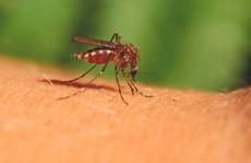 Cuộc 'yêu' tử thần giúp con người thoát khỏi muỗi?