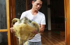 Thả rùa biển quý hiếm trong Sách đỏ về biển khơi