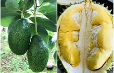 Càn quét thoả thích vườn trái cây chỉ với 50.000 đồng