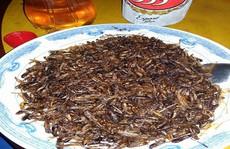 Đặc sản côn trùng ăn là nghiện