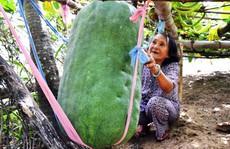 Lạ kỳ trái bí đao có thể 'giết người' ở Bình Định
