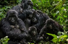 Mập mờ vụ Congo bán thú quý hiếm cho Trung Quốc