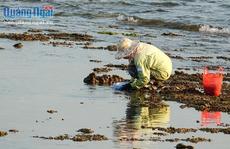 Chờ thủy triều rút đi săn con ăn béo ngậy
