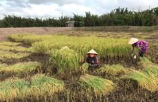 Công ty nông sản hữu cơ vốn 0 đồng kêu gọi thành công 10 tỉ đồng: 'Chúng tôi cần người đồng hành'