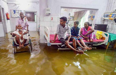 Ấn Độ: Mưa lớn gây ngập nặng, cá bơi vào bệnh viện