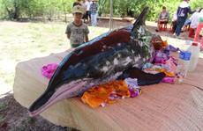 Ngư dân Quảng Nam bất lực nhìn cá voi 2 tạ trôi vào bờ