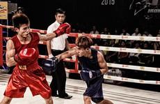 VINA BOXING CUP 2018: Sôi động quyền anh Việt - Hàn