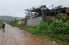 Vụ vỡ mộng đại dự án cao su: Rừng bị tàn sát, gỗ bán 10 năm chưa thu được tiền