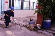 Bắt chó thả rông giữa trung tâm Sài Gòn