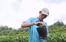 Nông dân Sa Đéc thuần hóa nhiều giống cây kiểng 'độc, lạ'