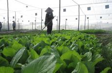 Khởi nghiệp mảng hữu cơ cần sức bền