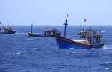 Cà Mau đề xuất 18 người sang Thái Lan 4 ngày học kinh nghiệm quản lý tàu cá