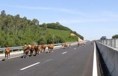 Cao tốc Đà Nẵng- Quảng Ngãi: Câu hỏi của Bộ trưởng vẫn bỏ ngỏ!
