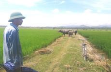 Nhiều khoản phí 'lạ' ở Quảng Bình: Trâu, bò, vịt, máy cày,… ra đồng phải đóng phí