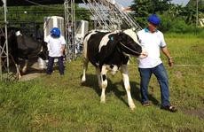 27 'thí sinh' tham gia vòng chung kết 'hoa hậu bò sữa' tại Củ Chi