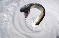 Mỹ vừa hứng 'bão quái vật' Florence vừa lo rắn độc