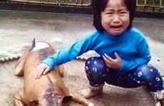 Cấm ăn thịt chó có gì khó!