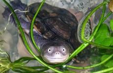 Bác sĩ tá hỏa phát hiện rùa chết trong... 'chỗ kín' của cô gái
