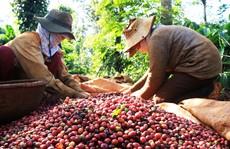 Học từ hạt cà phê
