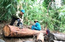 Vụ phá rừng ở Lâm Đồng: Sự thật có bị bẻ cong?