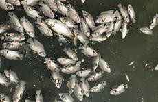 Cả ngàn người dân hoang mang khi nước đổi màu, bốc mùi, cá chết hàng loạt